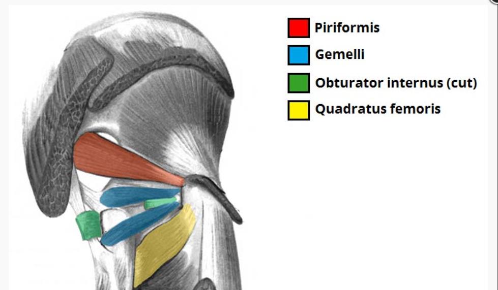 anatomija trening mišic nog in zadnjice