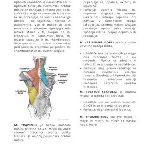 Moč in hipertrofija